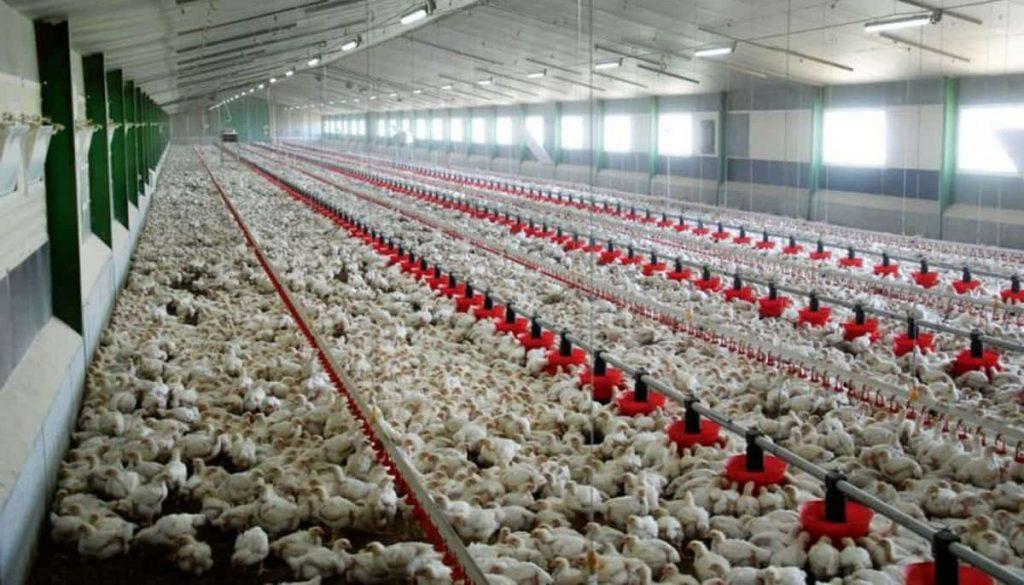 واحدهای تولیدی مرغ و تخم مرغ