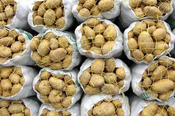 ارزان خریدن سیب زمینی از طرف عراقیها