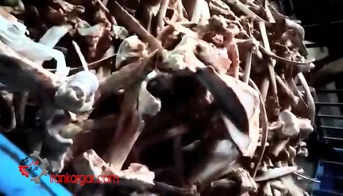 هجوم مردم برای خرید استخوان و رواج استخوان خواری در آبادان