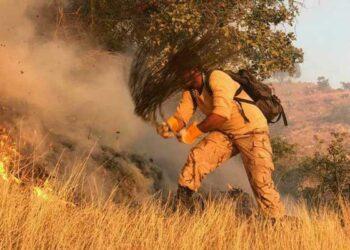 آتش سوزی سوختن جنگل ها و مراتع طبیعی درآتش بیتدبیری حاکمیت