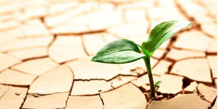 مقابله با خشکسالی